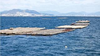 カキフライ海