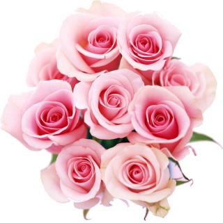 Flower3917